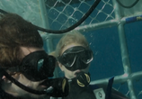 Сцена из фильма Над глубиной: Хроника выживания / Cage Dive (2017)