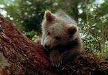 Скриншот фильма Медведь / L'ours (1988) Медведь