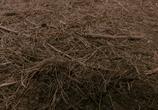 Кадр изо фильма Зловещие мертвецы: Черная исследование