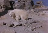 Сцена из фильма Аляска / Alaska (1996) Аляска сцена 4