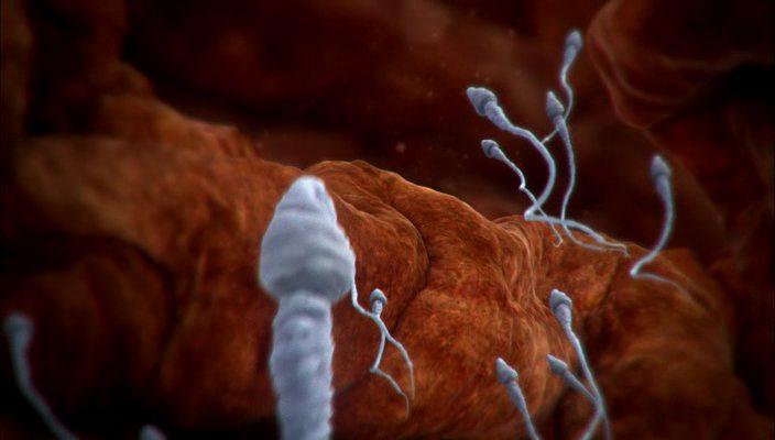 BBC: Внутри человеческого тела / BBC: Inside the Human Body)