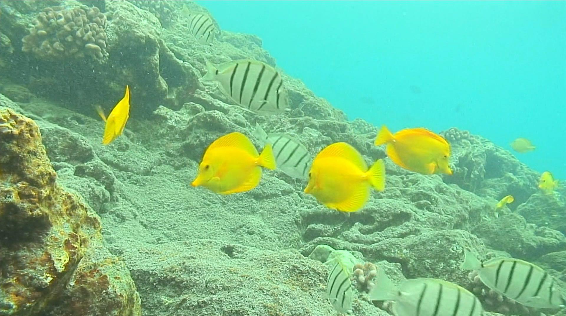 Живой подводный мир 3