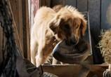 Сцена из фильма Собачья жизнь / A Dog's Purpose (2017)