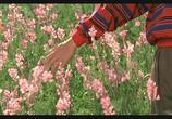 Сцена из фильма Цвет Рая / Rang-e khoda (1999) Цвет Рая сцена 6