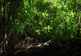 Сцена из фильма Легенда о золоте крокодилов / The Legend of Croc Gold (2016)