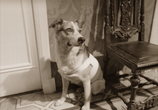Кадр изо фильма Собачье душа торрент 02290 мужчина 0
