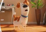 Кадр изо фильма Тайная общежитие домашних животных торрент 032457 мужчина 0