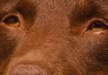 Сцена из фильма Рыжий пес / Red Dog (2011) Рыжий пес сцена 6