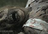 Кадр изо фильма Ходячие мертвецы