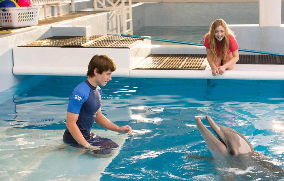 скачать торрент фильм история дельфина - фото 3