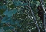 Кадр изо фильма Голодные игры торрент 057895 любовник 0