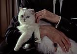 Кадр изо фильма Джеймс Бонд. Агент 007 - Из России от любовью торрент 02746 ухажер 0