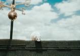Кадр с фильма Месть пушистых торрент 04667 сцена 0