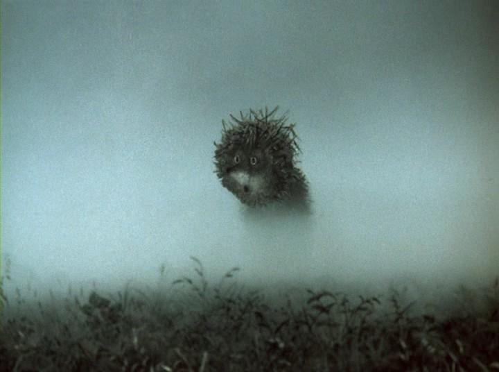 фото ёжика в тумане с узелком