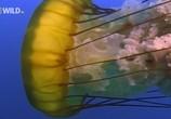 скачать фильм нашествие медуз