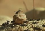 Сцена изо фильма Насекомые / Minuscule (2007) Насекомые (Минускулы) зрелище 02