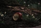 Кадр изо фильма Белоснежка равным образом выжлятник торрент 07099 план 0