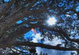 Кадр изо фильма V.A.: Uplifting Trance - Trance Emotion торрент 084203 сцена 0