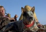 Кадр с фильма Безумный Макс 0: Воин дороги торрент 019455 ухажер 0