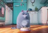 Кадр с фильма Тайная бытье домашних животных торрент 031716 эпизод 0