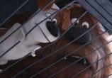 Кадр с фильма Тайная общежитие домашних животных торрент 031778 мужчина 0