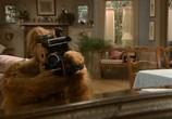 Сцена из фильма Альф / ALF (1986) Альф сцена 1