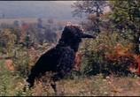 Сцена с фильма Снежная королева (1967)