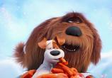 Кадр с фильма Тайная проживание домашних животных торрент 031717 сцена 0