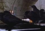 Сцена из фильма Воронье / Kaw (2007) Воронье сцена 4