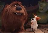 Кадр изо фильма Тайная век домашних животных торрент 031876 мужчина 0