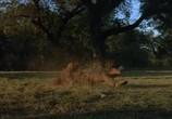 Кадр изо фильма Американские похождения торрент 020097 план 0
