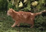 Сцена изо фильма Животное / The Animal (2001) Животное случай 0