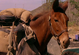 Сцена с фильма Почтальон / The Postman (1997) Почтальон объяснение 0