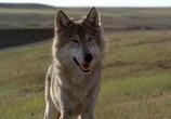 Кадр изо фильма Танцующий с волками торрент 02326 план 0