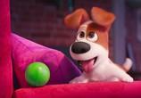 Кадр изо фильма Тайная житьё-бытьё домашних животных торрент 031708 ухажер 0