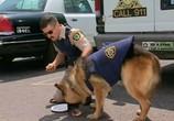 Сцена из фильма Рино 911 / Reno 911! (2003) Рино 911 сцена 3
