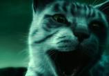 Кадр изо фильма Женщина-кошка торрент 093289 ухажер 0
