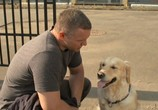 Сцена из фильма Собачья работа (2012) Собачья работа сцена 11