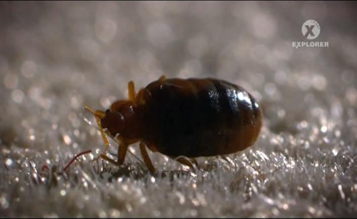 смотреть паразитов в организме