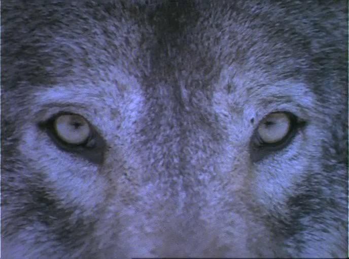 Серые волки cкачать через торрент в hd » кино-торрент | скачать.