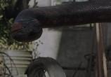 Кадр изо фильма Анаконда торрент 04472 люди 0