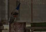 Сцена изо фильма Полуночный стрела / Midnight Express (1978) Полуночный стрела сценка 0