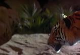 Кадр с фильма Книга джунглей