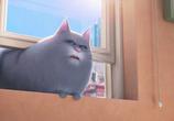 Кадр изо фильма Тайная бытье домашних животных торрент 031796 сцена 0
