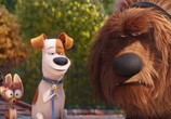 Кадр с фильма Тайная век домашних животных торрент 031707 любовник 0
