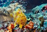 Сцена из фильма На глубине морской / Under the Sea (2009) На глубине морской сцена 2