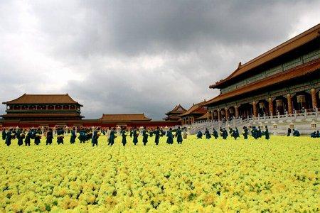Проклятие золотого цветка (2007) смотреть онлайн или скачать фильм.