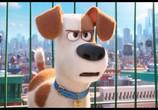 Кадр с фильма Тайная житьё домашних животных торрент 031703 сцена 0