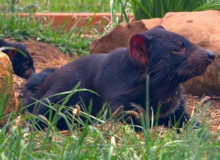 Жемчужины дикой природы австралии