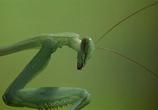 Скриншот фильма Букашки! / Bugs! (2003)